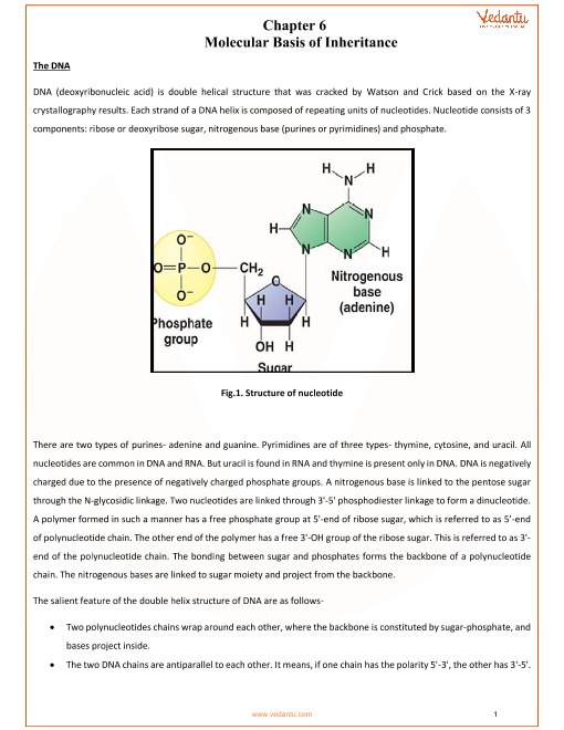 CBSE Class 12 Biology Chapter 6 - Molecular Basis of Inheritance ...