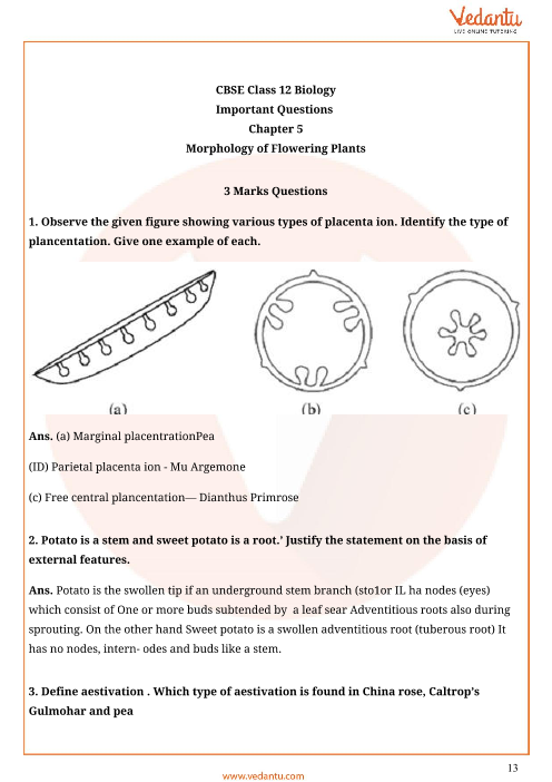 Important Questions For Cbse Class 11 Biology Chapter 5 Morphology