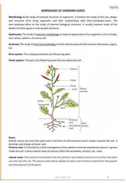 Chapter 5 - Morphology of flowering plants part-1